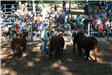 Image of competitors at the market beef show in the arena